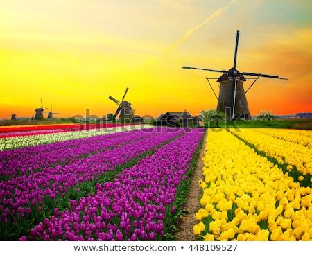 Windmills and Vibrant Colors Stock photo © ribeiroantonio