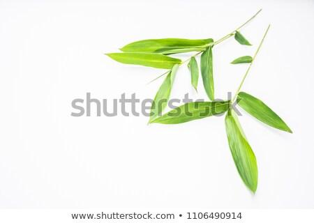 bamboe · bos · detail · groene - stockfoto © meinzahn