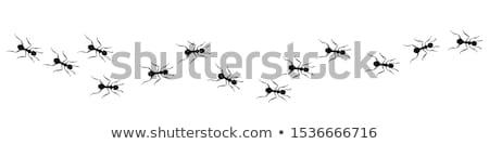Formiga criação muitos voador formigas Foto stock © smithore