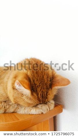 Weinig Rood kitten slapen witte vreedzaam Stockfoto © ryhor