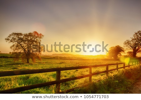 sunrays over green field with path Stock photo © mycola