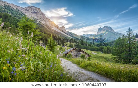 альпийский пастбище небольшой свободный лет итальянский Сток-фото © Antonio-S