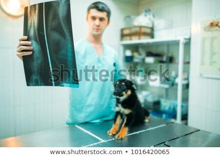 Equipment from the veterinarian Stock photo © ivonnewierink