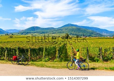 Stock photo: Vineyards Near Ribeauville Alsace France