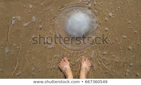Meduza tengerpart homok Stock fotó © ivonnewierink