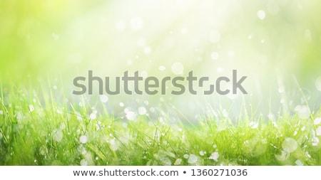 Verde fresco grama primavera temporada Foto stock © pixelman