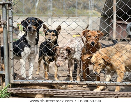 Kennel Stock photo © adrenalina