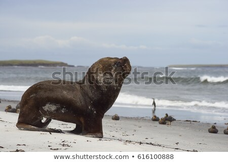 sea lions on a remote beach stock photo © wildnerdpix