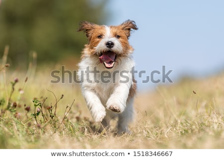 Labrador fekete bolyhos kutya ül fehér Stock fotó © eriklam