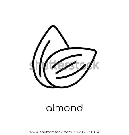 almond line icon stock photo © rastudio