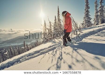 Hódeszka tél illusztráció természet jókedv sí Stock fotó © adrenalina
