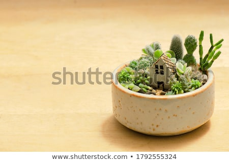 Miniature Garden Pots Stock photo © lenm