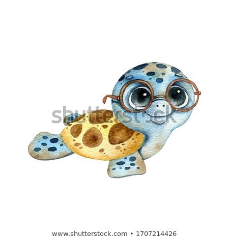 feliz · pequeno · desenho · animado · tartaruga · sorridente · vetor - foto stock © cthoman