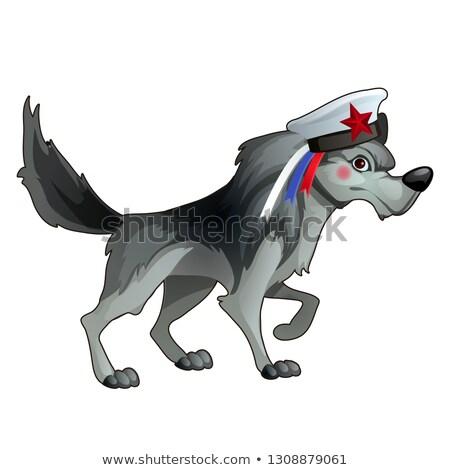 グレー 森林 オオカミ 船乗り 帽子 リボン ストックフォト © Lady-Luck