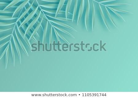 trópusi · pálmalevelek · papír · felső · kilátás · buli - stock fotó © furmanphoto