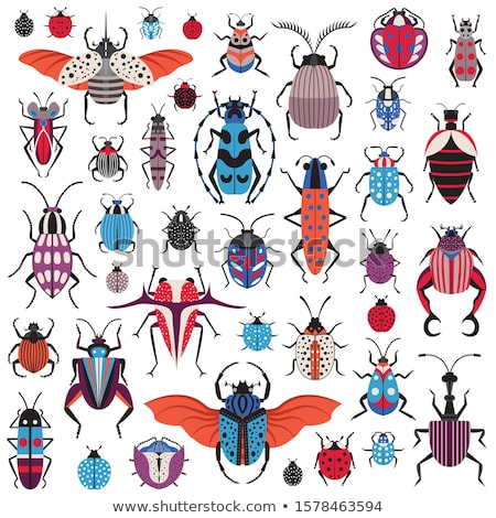 Set gândac bug ilustrare proiect fundal Imagine de stoc © bluering
