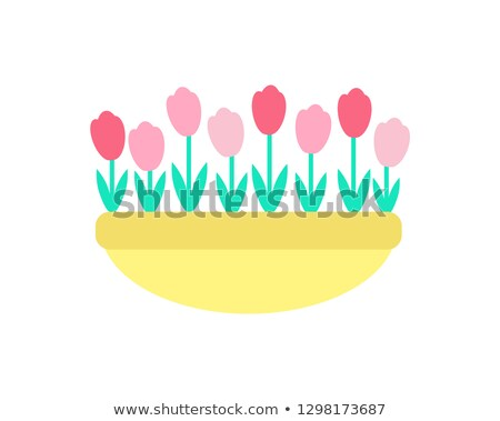 Tulips Grown in Clay Pot Vector Spring Flowers Stock photo © robuart