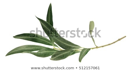 Olives With Leaf Isolated White Background Stock photo © adamson