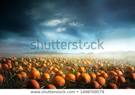 Halloween Pumpkin Field at Dusk Stock photo © solarseven