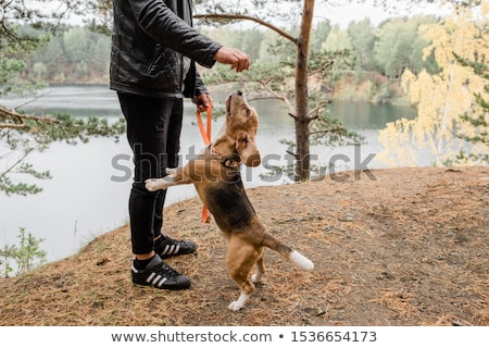 Young man in casualwear playing with cute funny beagle puppy by lake Stock photo © pressmaster