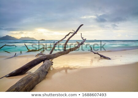 tropical beach and dead tree stock photo © fyletto