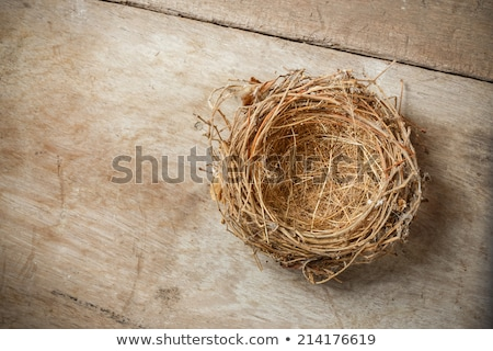Stockfoto: Lege · nest · afbeelding · gras