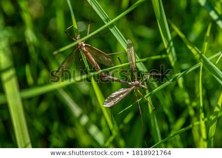 pernas · longas · voar · verde · natureza · cidade · casa - foto stock © sweetcrisis