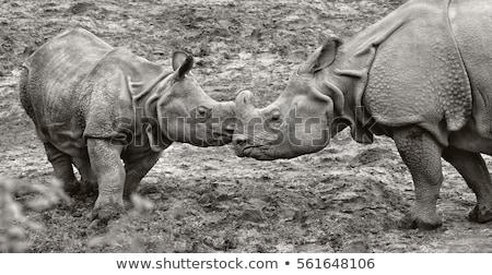 rhino in the wild life  Stock photo © OleksandrO