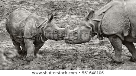 rhino in the wild life stock photo © oleksandro