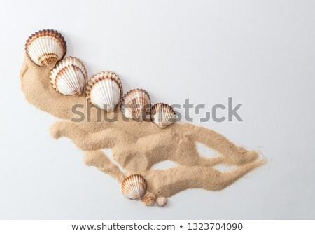 Eight Common Cockle Shells (Cerastoderma edule) Stock photo © haraldmuc