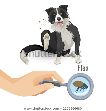 Doggie and Fleas Stock photo © pcanzo