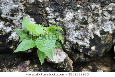 Stonework, green with water - background Stock photo © pzaxe