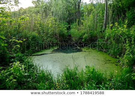 水面 · 緑色の葉 · 新しい · 生まれる · 詳細 · 水 - ストックフォト © taviphoto