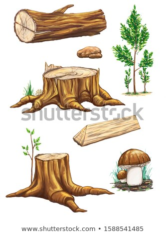 texture of mushrooms on a tree stump Stock photo © jarin13