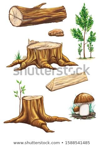 ağaç · mantar · havlama - stok fotoğraf © jarin13