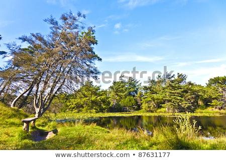 нетронутый природы острове Дания воды лет Сток-фото © meinzahn