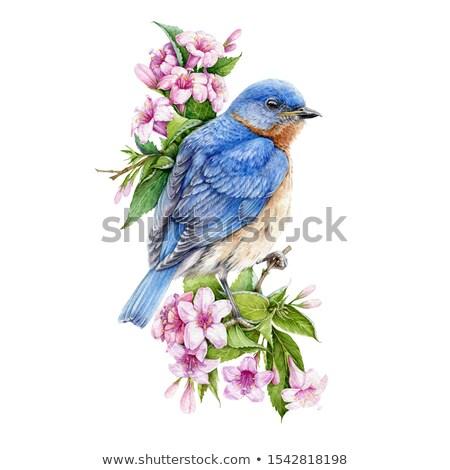 flores · backlight · flores · brancas · flor · primavera · natureza - foto stock © alessandrozocc