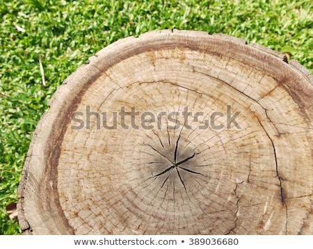 коричневый зеленая трава дерево трава лист газона Сток-фото © my-photomir