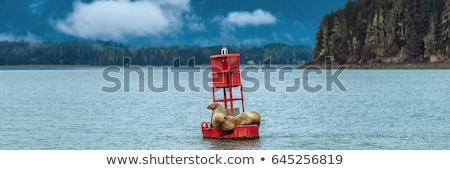 buoy sea lions stock photo © hlehnerer