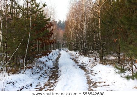 Temperate forest in winter Stock photo © smithore