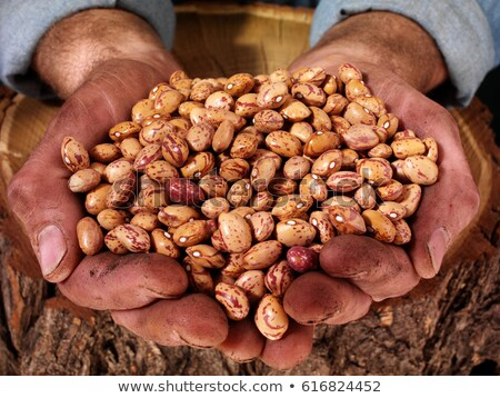 man holding a handful of dried pinto beans stock photo © ozgur