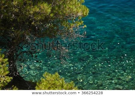木 海岸 行 ギリシャ ストックフォト © jeancliclac