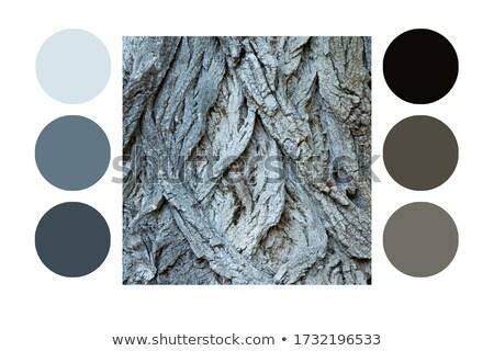 Stock photo: Tree Log Sawing Scheme