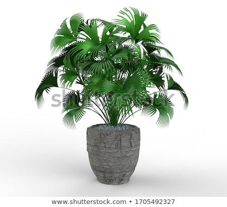 green pot stock photo © fisher