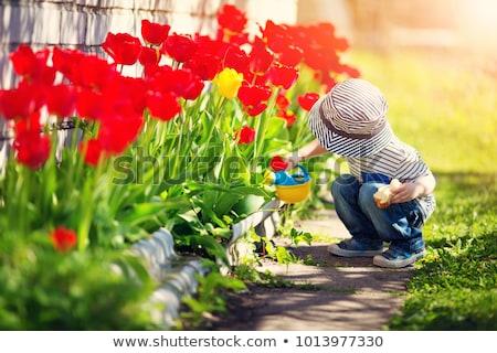 narcissen · voorjaar · tuin · gras · gazon · Geel - stockfoto © unikpix