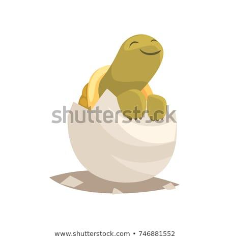 черепахи яйцо иллюстрация природы фон искусства Сток-фото © bluering