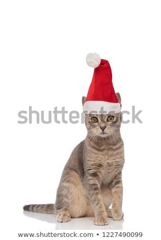 Liebenswert sitzend Katze gelb Augen Stock foto © feedough