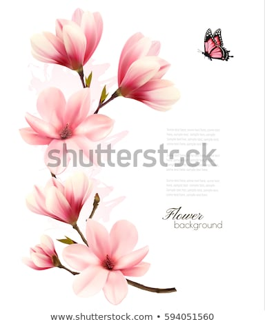 blossoming tree brunch with pink flowers beautiful magnolia tree stock photo © margolana