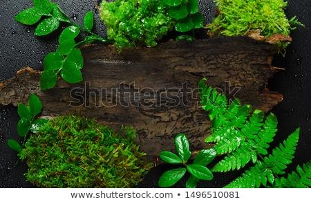 Détail bois fougère laisse forêt vert Photo stock © boggy