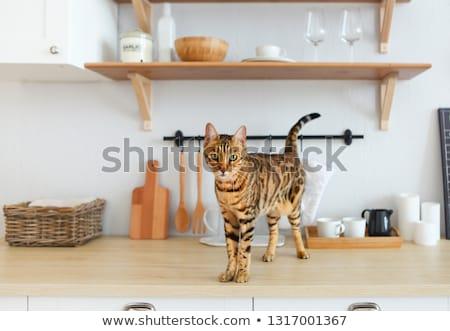 Beautiful bengal cat on white kitchen table with the plant Stock photo © dashapetrenko